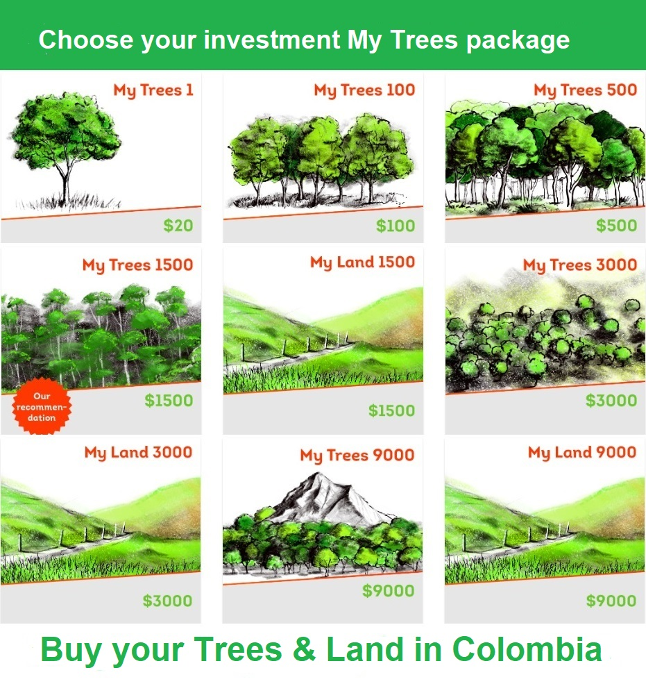 Choose an investment My Trees package / Buy trees & land in Colombia. My Trees1 / $20 / 1 tree. My Trees 100/ $100 / 6 trees. My Trees 500/ $500 / 31 trees. My Trees 1500/ $1500 / 93 trees. My Trees 3000/ $3000 / 187 trees. My Trees 9000/ $9000 / 562 trees