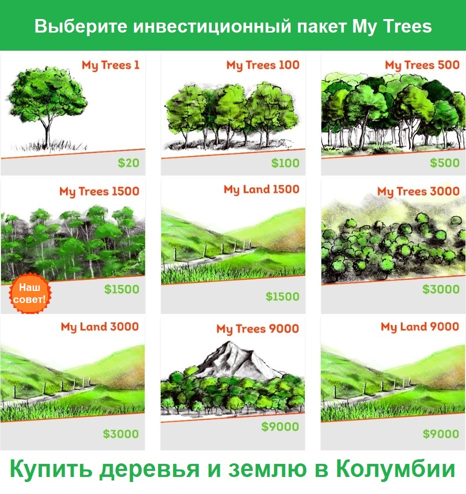 Выберите инвестиционный пакет My Trees / Купить деревья и землю в Колумбии. My Trees 1 / 20 $ / 1 дерево. My Trees 100/100 $ / 6 деревьев. My Trees 500 / $ 500/31 дерево. My Trees 1500/1500 $ / 93 дерева. My Trees 3000/3000 $ / 187 деревьев. My Trees 9000/9000 $ / 562 дерева.