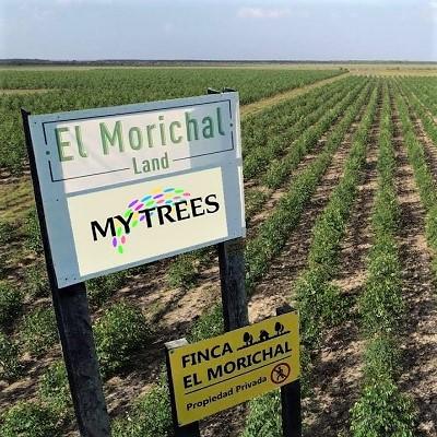 My Trees possiede la terra nella fattoria di El Morichal / Vichada in Colombia